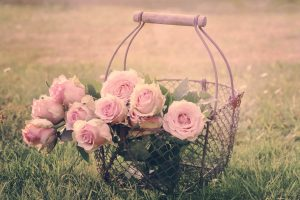 Newthetazone.hu - rózsák, harmónia